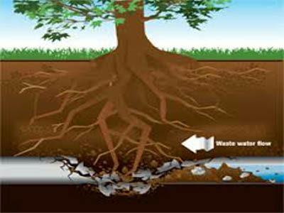 Canalisation bouchée par des racines